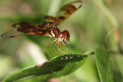 Halloween Dragonfly eating with Bad Manners on Make a GIF