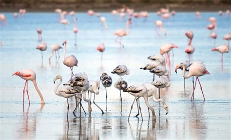 10 Fun Facts You May Not Know About the Flamingos in