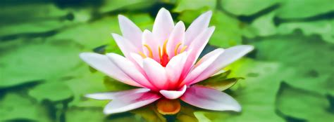 The Lotus Blossom method: ideation on steroids | by Phil