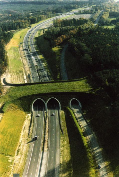 New Solutions | Wildlife Crossing Structures | ARC